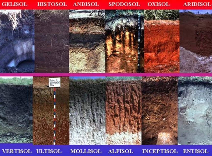 JenisJenis Tanah Di Indonesia  Definisi Pengertian