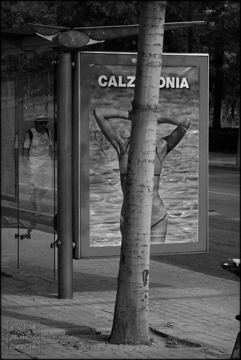 Límites, serie, arte, fotografía, Valencia, cartel, árbol, mujer