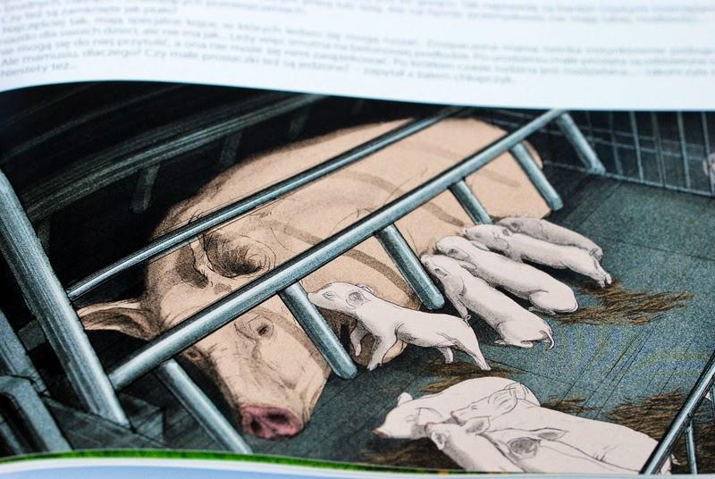 Świnie w hodowli przemysłowej