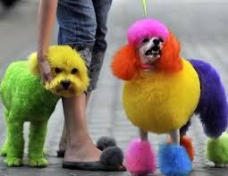 pareja de perros arcoiris a las puertas de cice