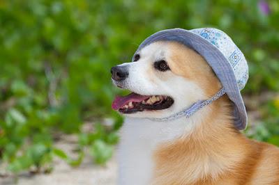 沖縄 ペット同伴 写真