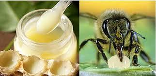 sữa ong chúa tươi nguyên chất
