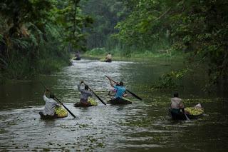 שוק גויאבה בבנגלדש