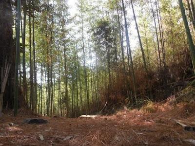 PINE GROVE, Ziro, Arunanchal