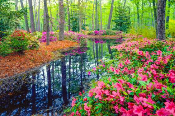 123photogo The Most Beautiful Places In The World To See Spring Flowers