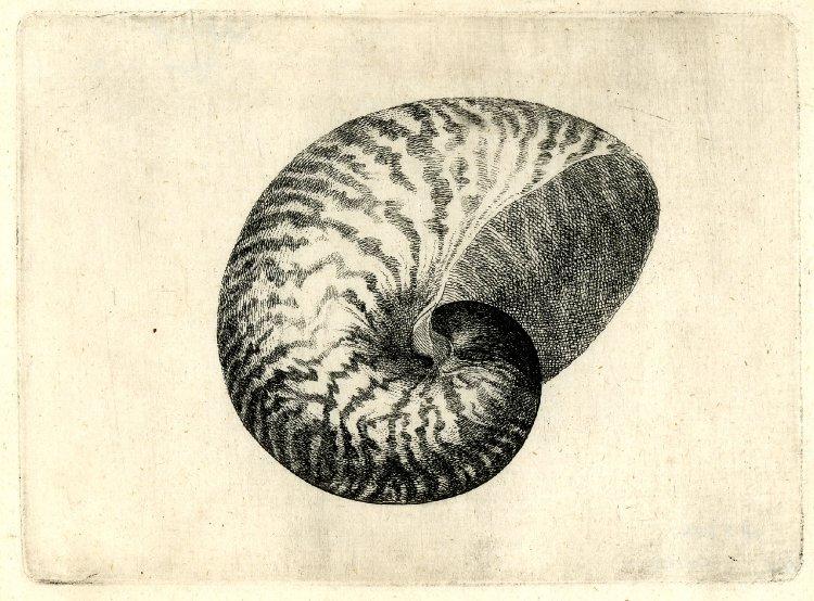 Rembrandt Exhibition Shell : Art artists wenceslaus hollar part