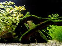 glonyw akwarium