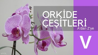 Orkide Çeşitleri V - W - Z Harfi İle Başlayan Orkideler