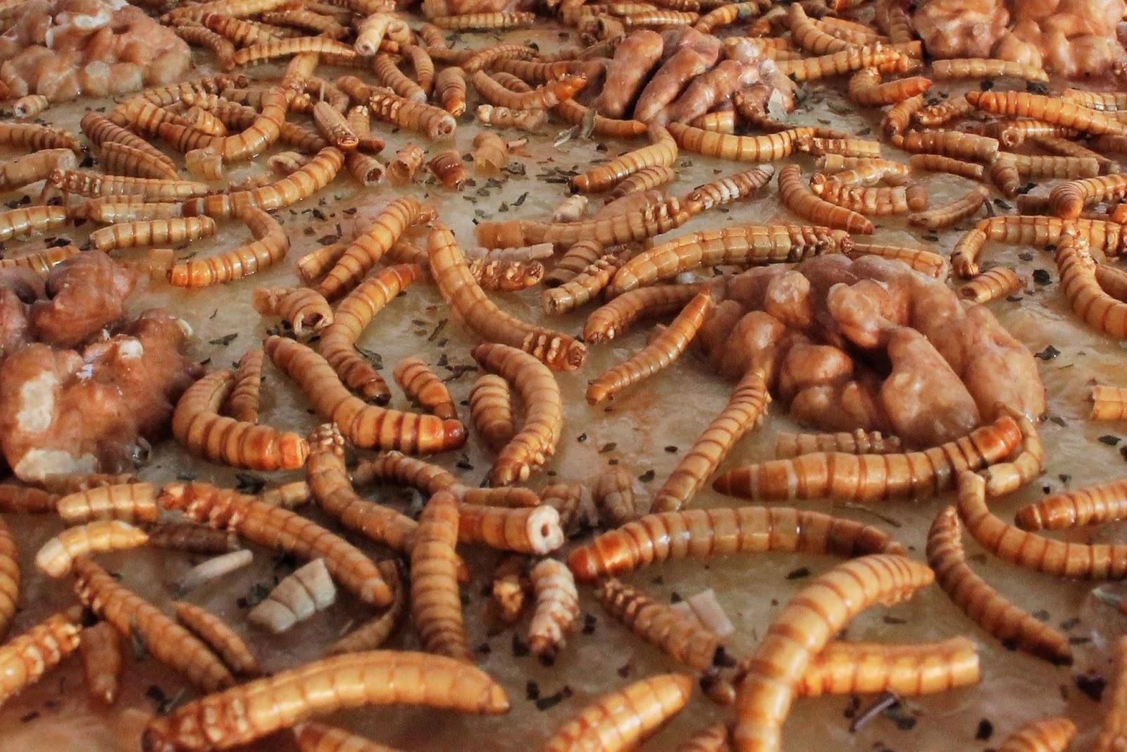 jimini's cuisiner insectes molitors pizza noix