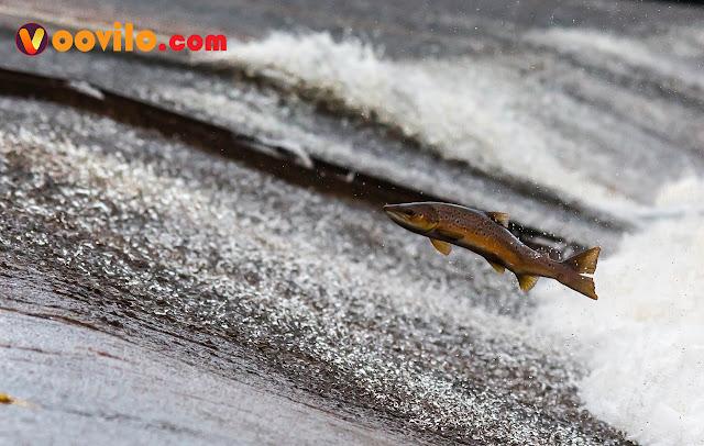 Kisah inspiratif seekor ikan dengan air
