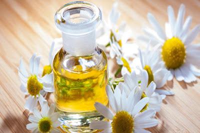 minyak chamomile