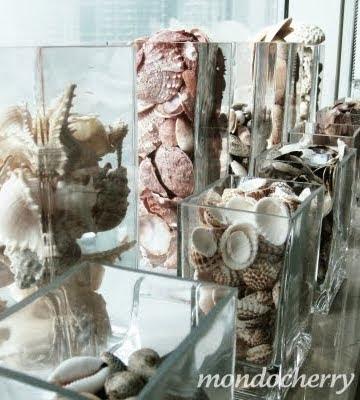 seashells in vases
