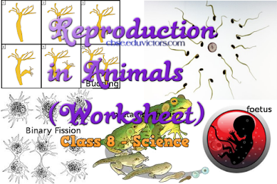 CBSE Class 8 - Science - Chapter 9 - Reproduction in Animals (Worksheet)(#cbsenotes)(#eduvictors)