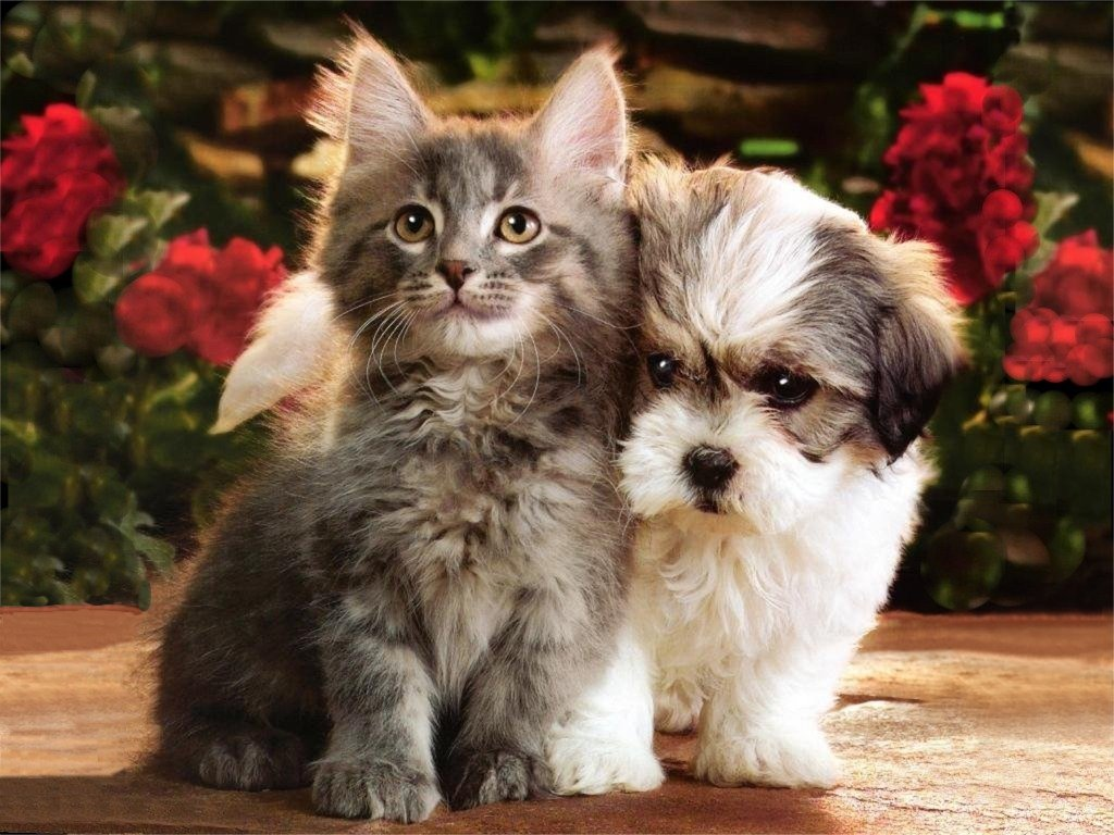 Free games wallpapers kitten and puppies hd wallpapers - Free wallpaper of kittens ...
