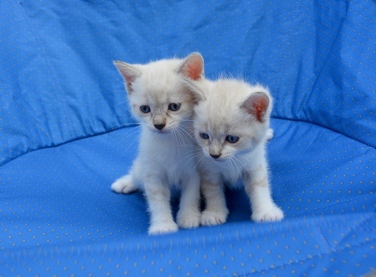 dua ekor anak kucing paling comel