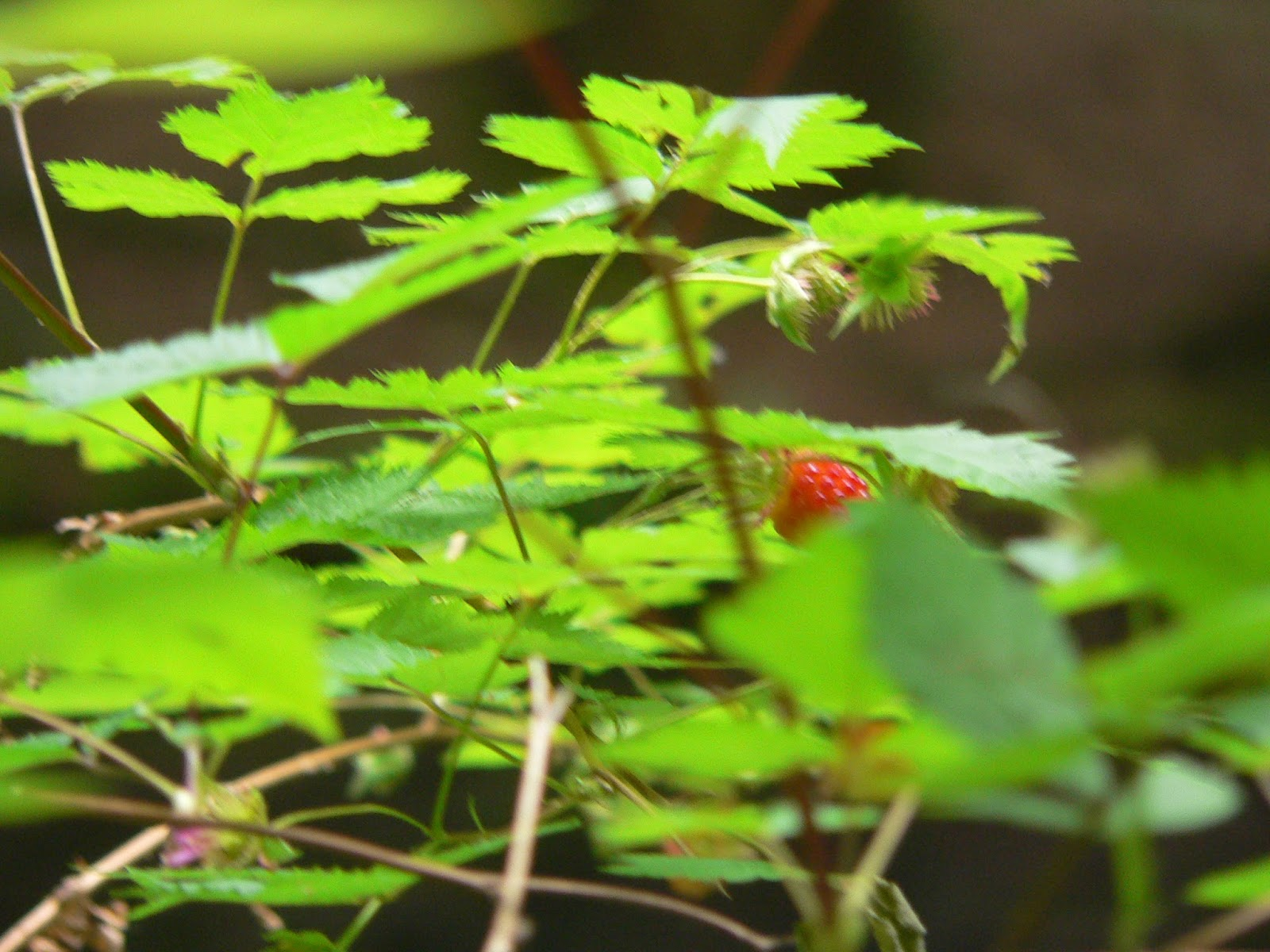 She Led Me Around The Little Body Of Water Introducing To Its Wonders Ferns Salmonberries And A Nursery Log