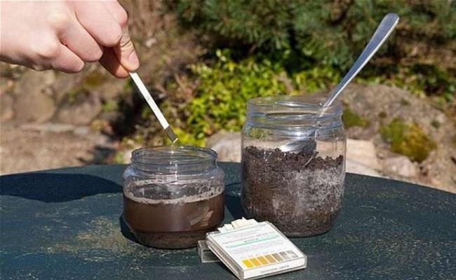 Hướng dẫn kiểm tra độ pH của đất trồng