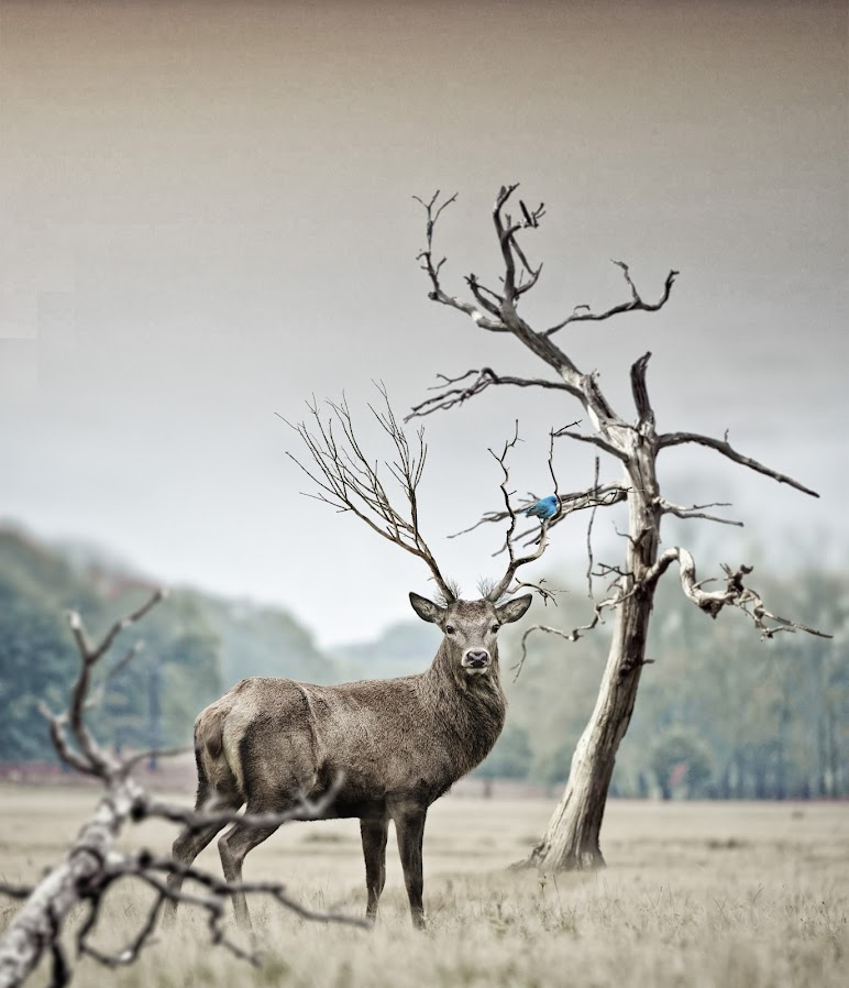 Brown Deer Near Withered Tree