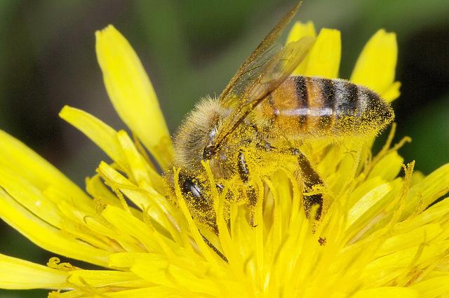 france-abeille-interdiction-neocotinoides-adoxa