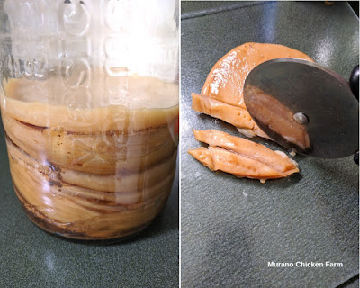 Cutting up a scoby for chickens.