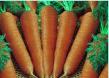 soal usbn perkembangbiakkan pada tanaman wortel