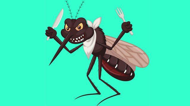 Como eliminar mosquitos de forma natural
