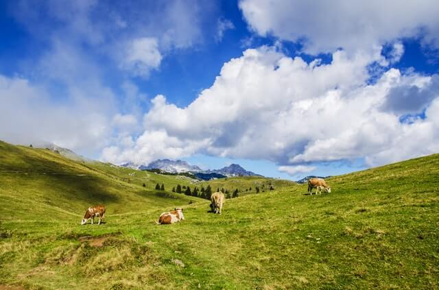 Agriculture Alps Animal Background HD Copyright Free Image