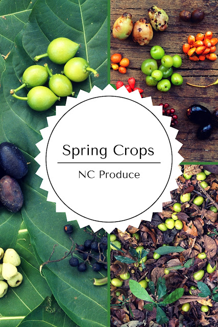 A guide to Spring Crops in North Carolina