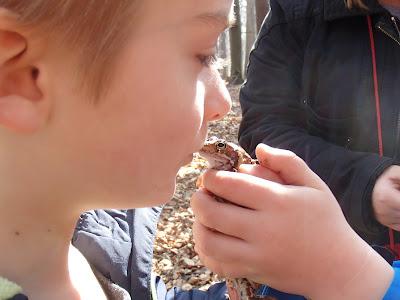 Las Bronaczowa, wiosna w podkrakowskich lasach, wielkanocny spacer, grzyby nadrzewne, grzyby w marcu,  drewniak szkarłatny Hypoxylon fragiforme, wrośniak garbaty - Trametes gibbosa,  łzawnik rozciekliwy Dacrymyces stillatus, trąbka zimowa Tubaria hiemalis, miodunka ćma Pulmonaria obscura, żywiec gruczołowaty Cardamine glanduligera, podbiał pospolity Tussilago farfara