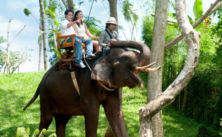 Bali Zoo Park Packages - Singapadu, Sukawati, Gianyar, Bali, Holidays, Tours, Adventure, Attractions, Bali Zoo Park