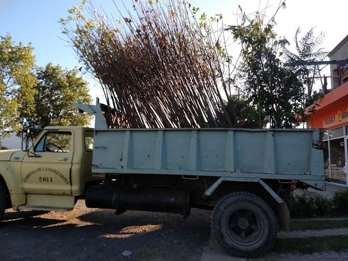 Comuna de La Vanguardia sigue apostando al cuidado del medio ambiente