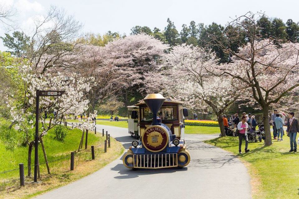 Share Experience Tour to Japan Park