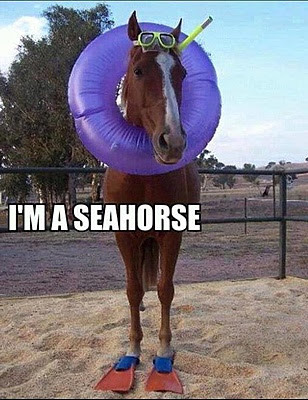 Horse wearing sea equipments