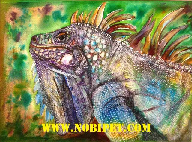 cach-nuoi-iguana-reptile-bo-sat-rong-nam-my