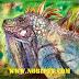 Cách Nuôi Iguana Reptile - Rồng Nam Mỹ chuyên nghiệp