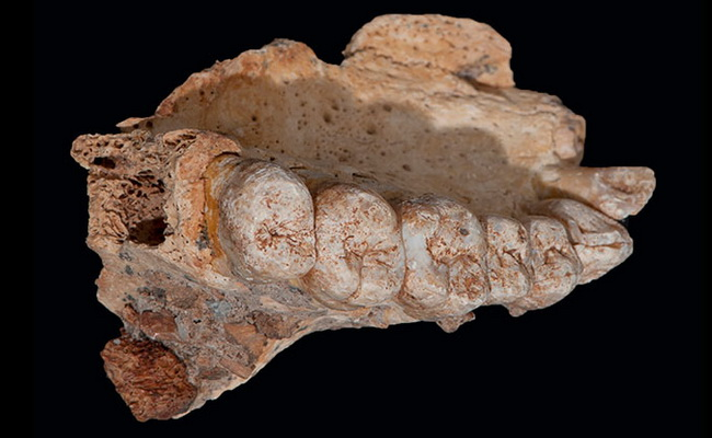 Laporan Penelitian Fosil Gua Misliya di Israel adalah Manusia Modern Tertua di Luar Afrika