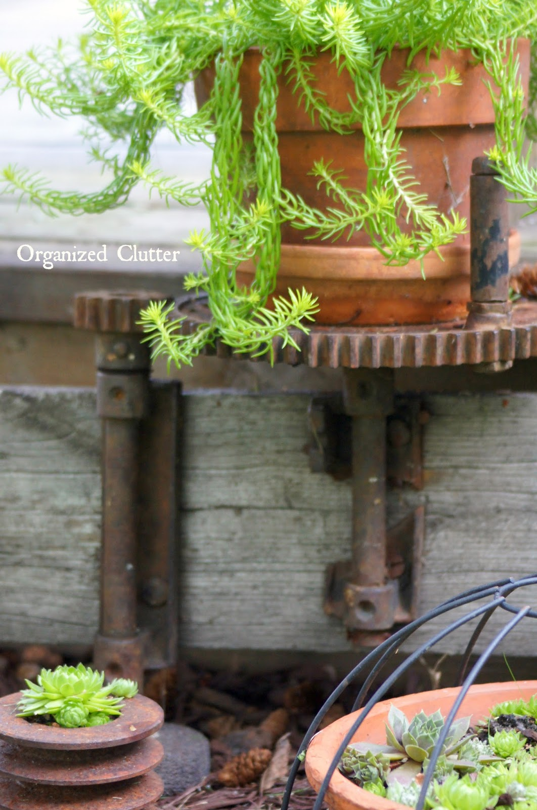 Gears, Pulleys, Old Wood, and Succulents www.organizedclutterqueen.blogspot.com