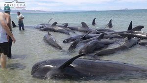 Ballenas varadas mexico california