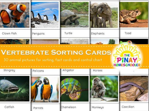 Vertebrate Sorting Cards