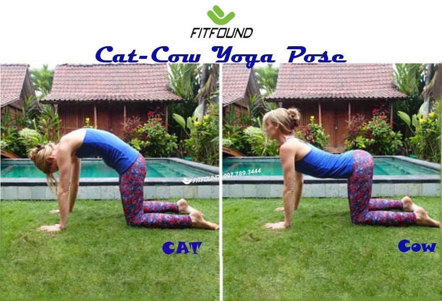 7-buoc-thuc-hien-tu-the-meo-bo-trong-yoga