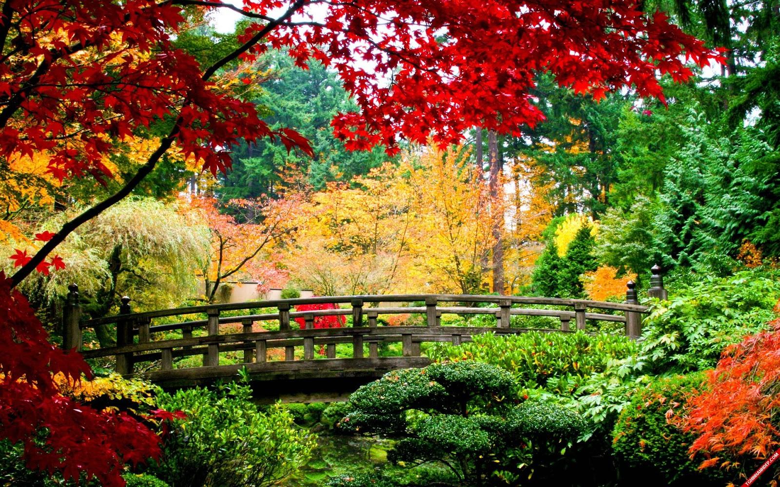 hình nền cây cầu gỗ giữa thiên nhiên rất đẹp