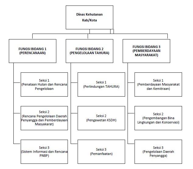 STRUKTUR ORGANISASI DINAS KEHUTANAN KABUPATEN/KOTA TIPE B