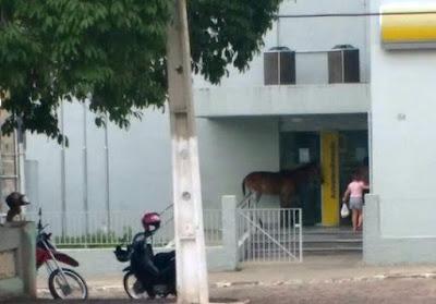 Resultado de imagem para animais soltos nas ruas em São José do Belmonte