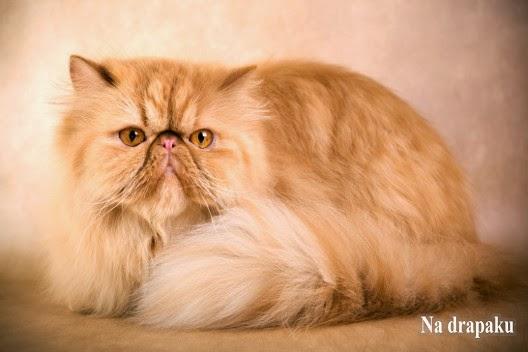 Czy koty trzeba czesać?