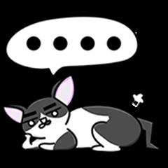 Mdmmd. × Chubby Cat