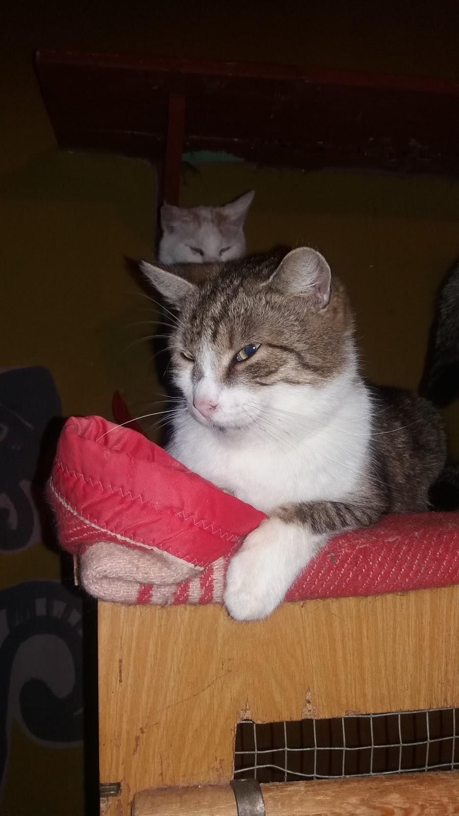 krásná kočička hd