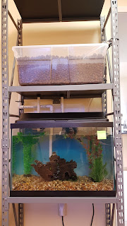 Indoor aquaponics, indoor aquaponics system, diy aquaponics system