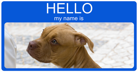 Good Names For Pitties