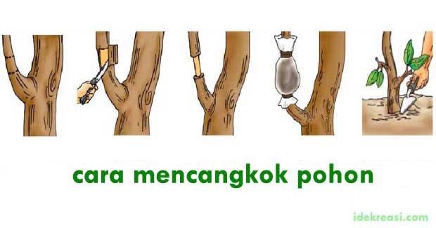 cara mencangkok pohon