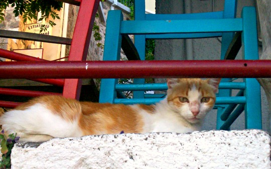 molyvos lesbos cat